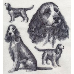 English Springer Spaniel (full tail)