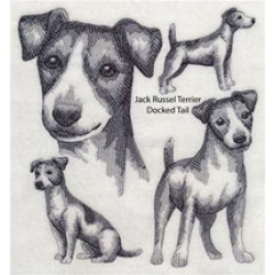 Jack Russell Terrier (docked tail)